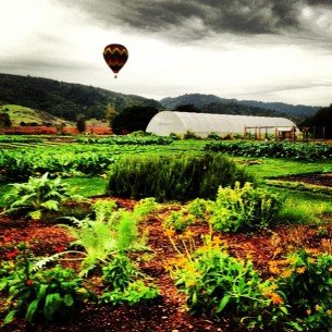 Hot Air Balloon over farm