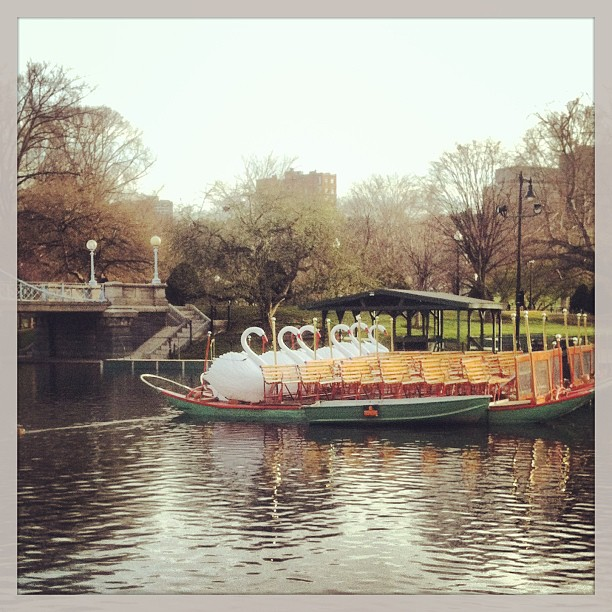 Swan Boats on Marathon Monday